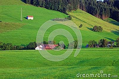 Green alpine hillside.