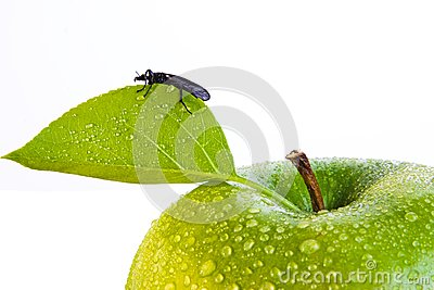 Green apple and bug