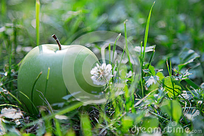 Green apple in the grass