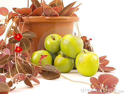Green Apples Stacked Near Red Flowers & Brown Vase