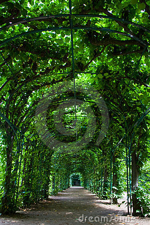 Free Green Arbor Royalty Free Stock Photos - 13238988
