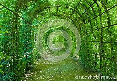 Green arcade