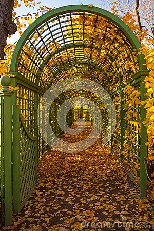 Green arch in autumn park.