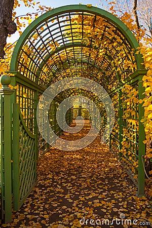 Green arch in autumn park.