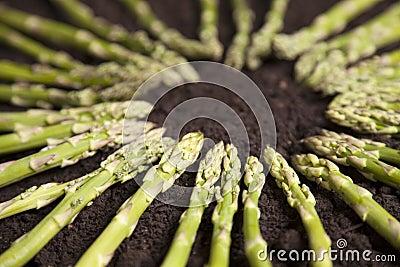 Green Asparagus Circle