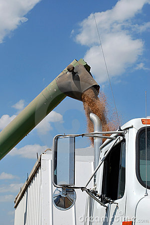 Free Green Auger Unload Wheat Into White Semi Royalty Free Stock Photo - 16133065
