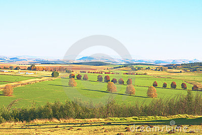 Green autumn agriculture landscape with trees