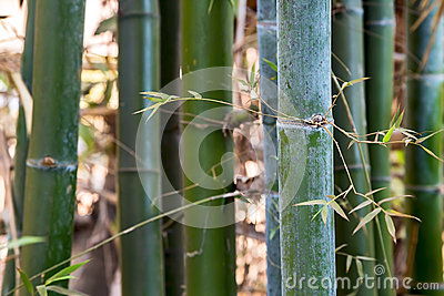 Green background bamboo