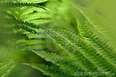 Green background with fern leaves