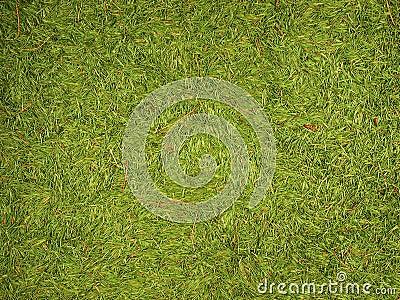 Green background of fir needles