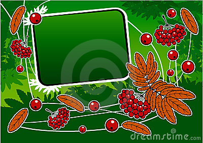 Green background with red ashberry and banner