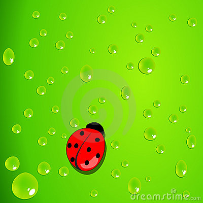 Green background with waterdrops and ladybug
