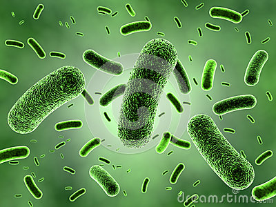 Green Bacteria Colony