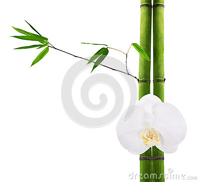 Green bamboo branches and white orchid flower