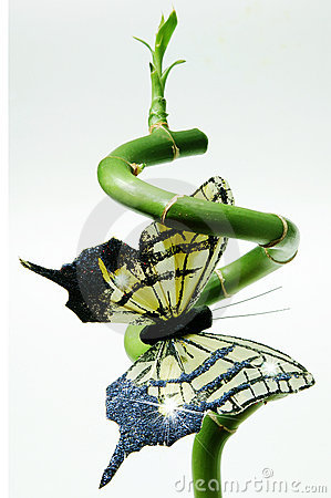 Green bamboo and butterfly