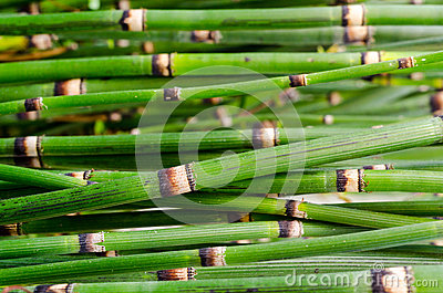 Green bamboo close up