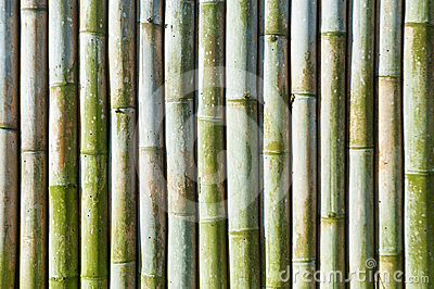 Green bamboo fence