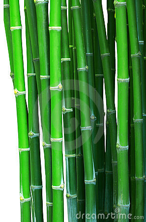 Green bamboo isolated white