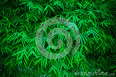 Green bamboo leavs background