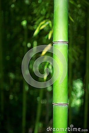 Green Bamboo Stalk