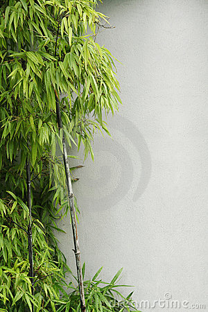 Green bamboo and wall