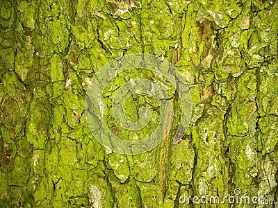 Green bark
