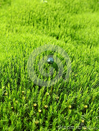 Green beetle on the field