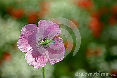 Flower with beetle