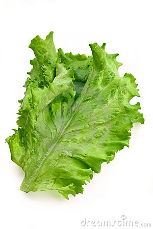 Free Green Big Fresh Salad Leaf Royalty Free Stock Photo - 1758045