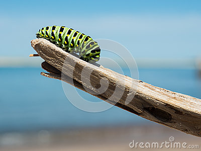 Green And Black Catterpillar On A Wood In Daylight Close Photography Free Public Domain Cc0 Image