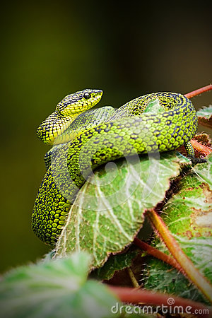 Green And Black Snake On Green Leaf Plant Free Public Domain Cc0 Image