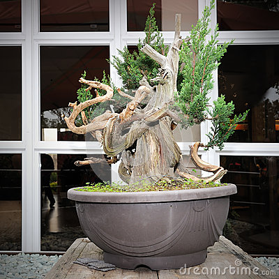 Green bonsai