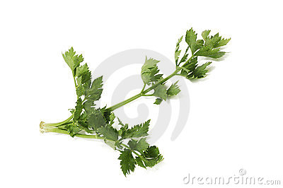 Green branch of a celery