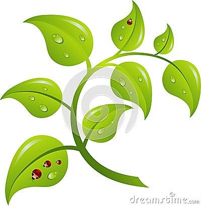 Green branch tree,
