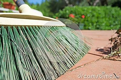 Green broom closeup
