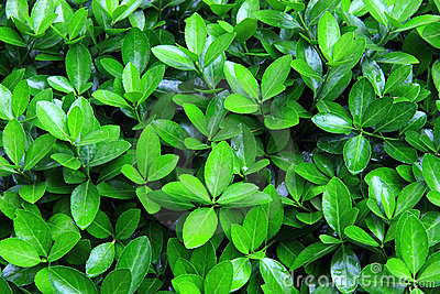 Green bush after rain