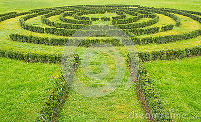 Green bushes Labyrinth