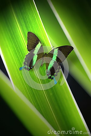 Free Green Butterfly Royalty Free Stock Images - 26834979