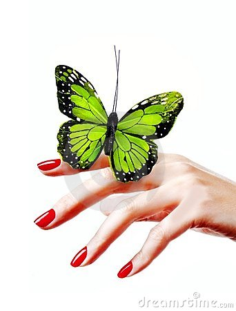 Free Green Butterfly Royalty Free Stock Photography - 8230277