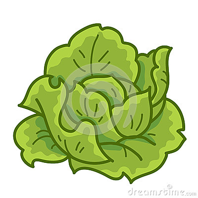 Green Cabbage Royalty Free Stock Photography - Image: 32108837