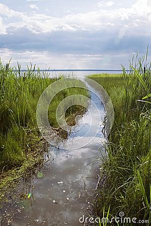 Green cane and blue lake