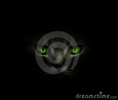 Green cat s eyes glowing in the dark