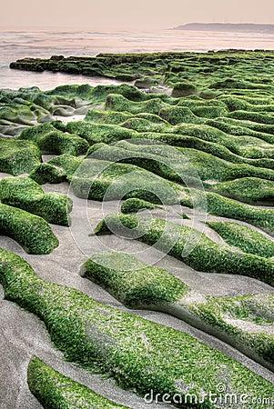 Free Green Coast Royalty Free Stock Photo - 13795405