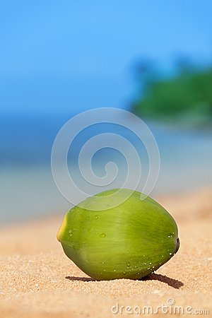 Green coconut fell on beach