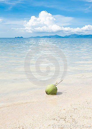 Green coconut on white beach sand