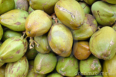 Green Coconuts for Sale