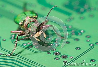Green computer bug