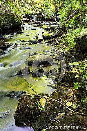 Green creek in spring