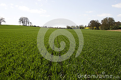 Green crop field Stock Photo