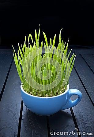 Green Organic Food Wheatgrass